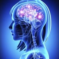 Brain Health & Focus